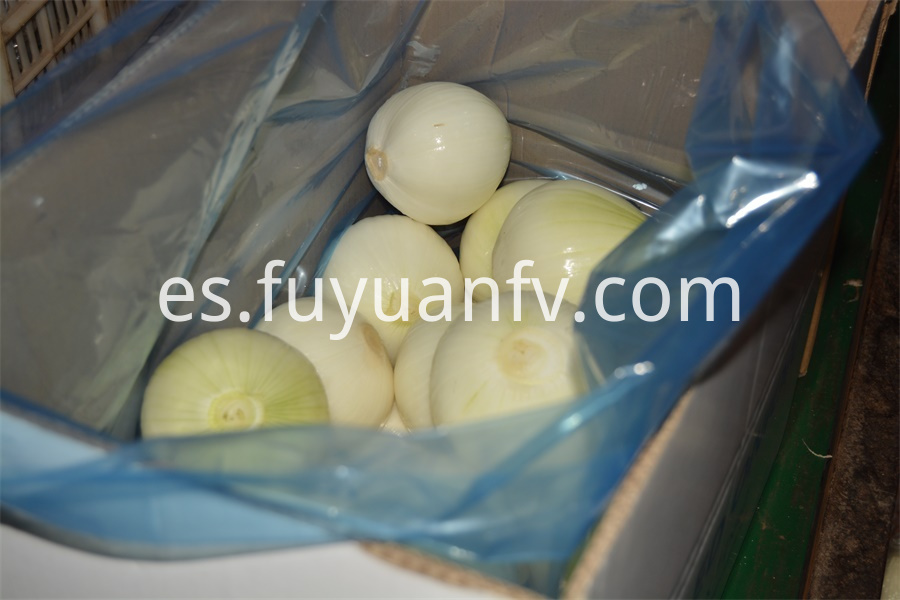 Fresh Peeled Onion